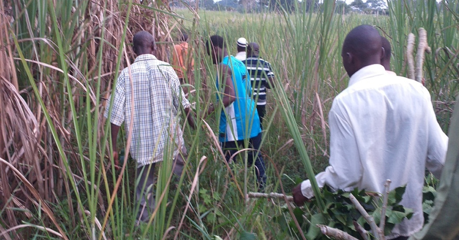 Sugar Cane Field to Healthcare Clinic